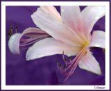 8/4/04 - Fading Glory