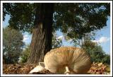 9/30/04 - Fall Shroom