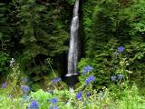 Loowit Falls and Wildflowers
