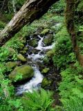 Creeklet
