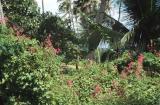 23-14 Dense foliage close to the entrance