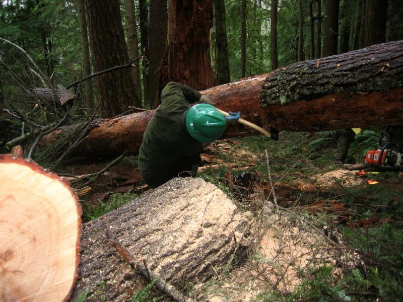 John<br>Chainsaw ran out of gas...finished cutting manually</br>