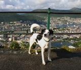 Joop's Dog Log - Saturday August 07