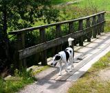 Joop's Dog Log - Saturday October 02
