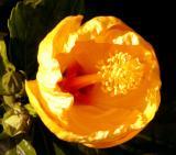 IMG_1612 flowers.jpg