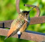 Baby Hummer