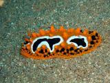 Wart Slug