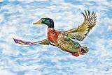 Mr Duck