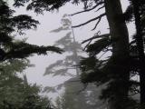 20010810 -- 3625.jpg  Japanese Alps  -- Canon G1