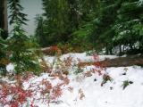 Reflection Lake, Mt. Rainier National Park