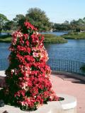 Poinsetta tree - World Showcase