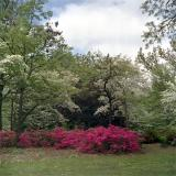 Woodward Park in Springtime