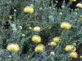 group of yellows.jpg