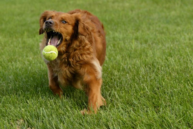 Ball catching