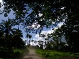 Tanna route vers Volcan