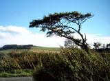 1st October windy spot...