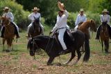 Peruvian Paso Horses 2