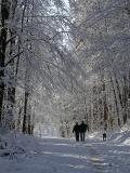 First Snow Forest.jpg