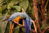 Randers TropicalRainforest