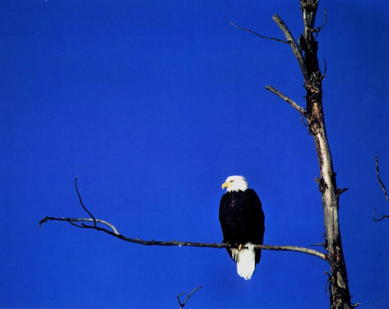 Alaska 1990 Haines