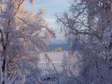 Anchorage Thru Trees