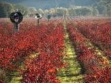 Vineyard fans