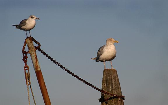 Gulls Watching The Buoys