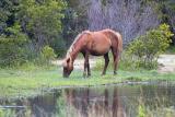 REFLECTION OBX WILD HORSES