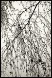 Mist Calligraphy
