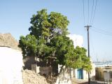 Old Mutrah