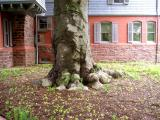 Sagamore Hill tree trunk