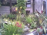 Sha`s Jungle Garden in South Wales