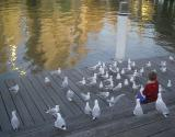 Lord of the Gulls