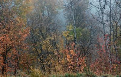 foggy autumn scene DSC_0006.jpg