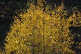 Aspen autumn DSC_0006.jpg