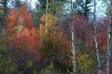 Autumn DSC_0044.jpg