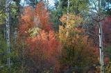 autumn DSC_0045.jpg