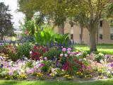 Campus blooms DSCN5146.jpg