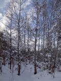 Aspen in winter DSCF0001.jpg