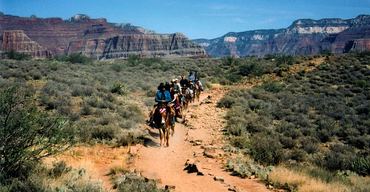 Grand Canyon - mules on the Bright Angel trail