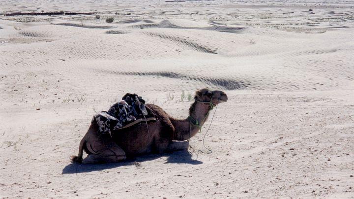 My trusty steed takes a break near Douz