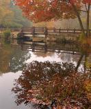 Foggy Morning_6053.jpg