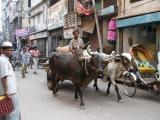 Ox Cart, Water Works Rd., Dhaka