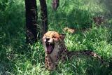 Hoedspruit Cheetah Project