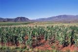 Countryside outside Maseru