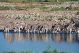 Zebra, Okaukuejo