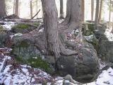 limestone7.jpg