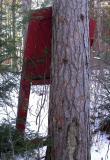 red door in the forest - 1