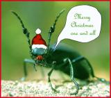 Rudolph the Red-nosed Blister Beetle