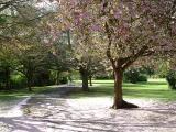 Fallen Blossom